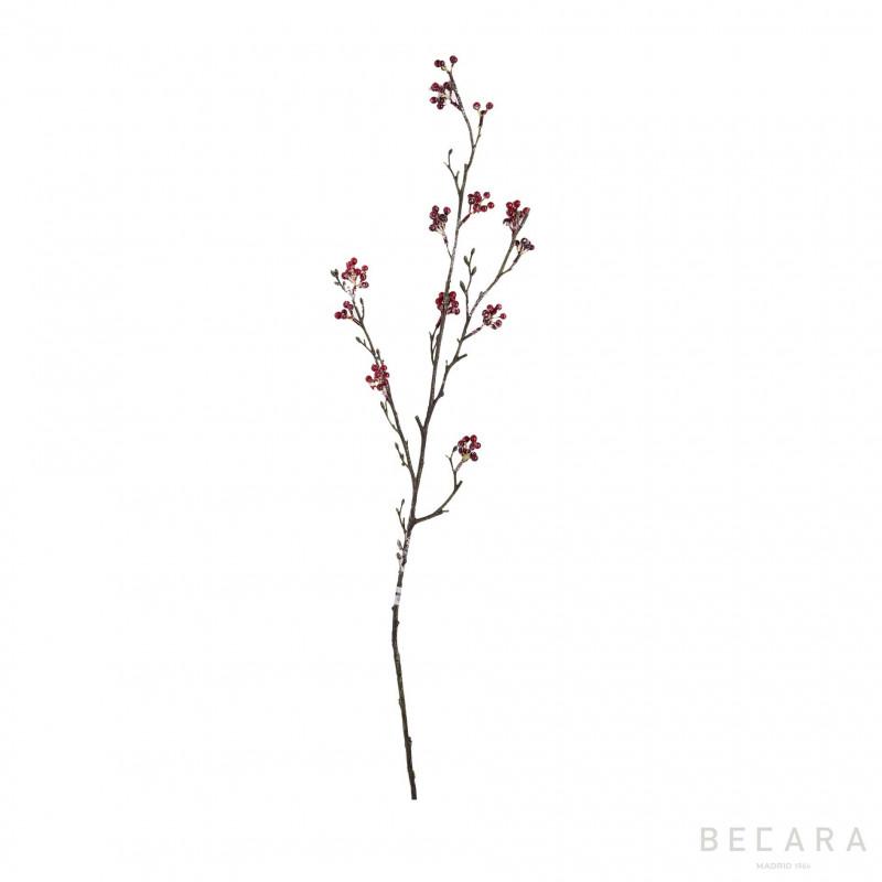 Rama de Baya - BECARA