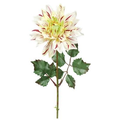 Flor de dalia blanca - BECARA