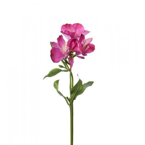 Flor de lirio peruano rosa - BECARA