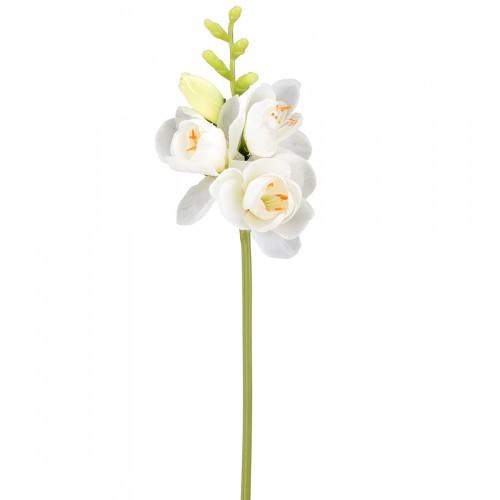 White freesia flower