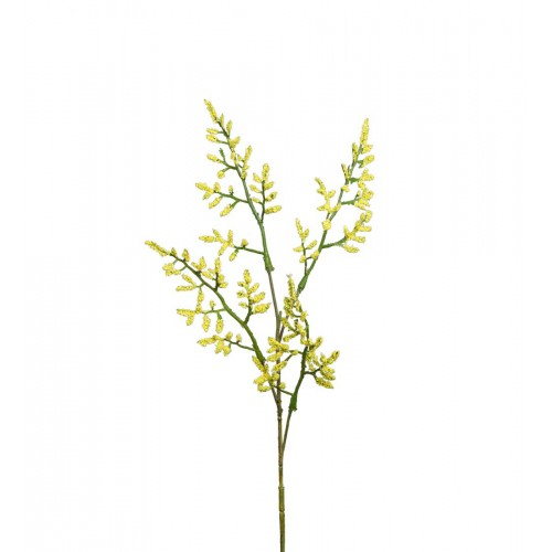 Rama de siempreviva amarilla - BECARA