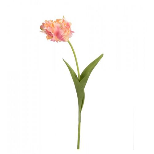 Wavy tulip flower