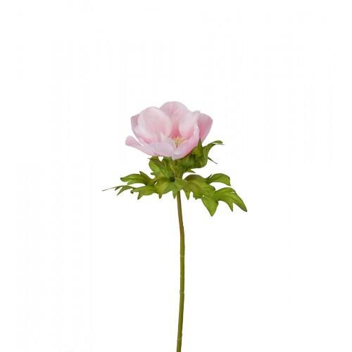 Flor de anémona rosa - BECARA