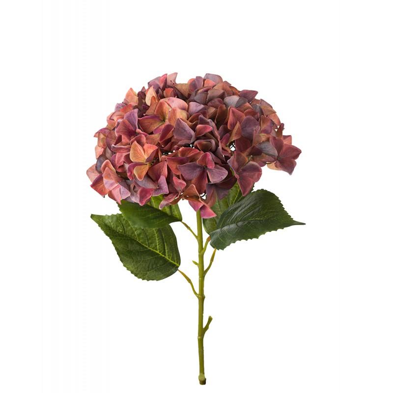 Maroon hydrangea flower