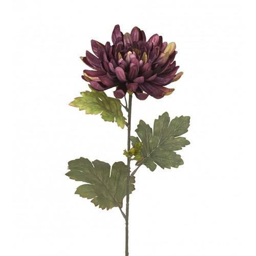 Chrysanths flower