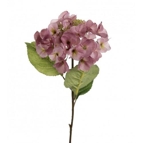 Pink small hydrangea flower