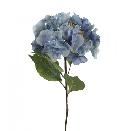Blue small hydrangea flower