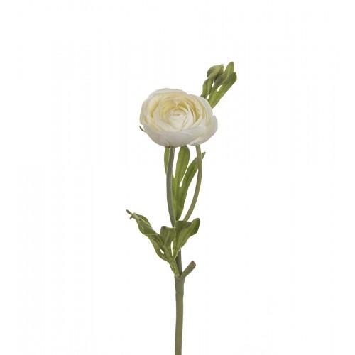 White Persian buttercups flower