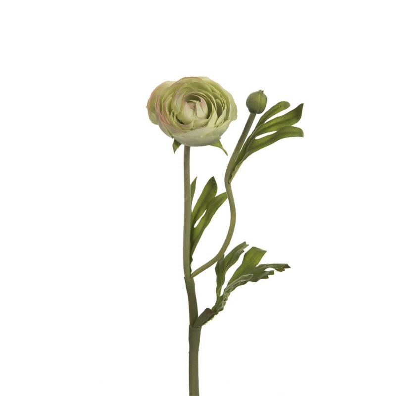 Flor de francesillas verde - BECARA
