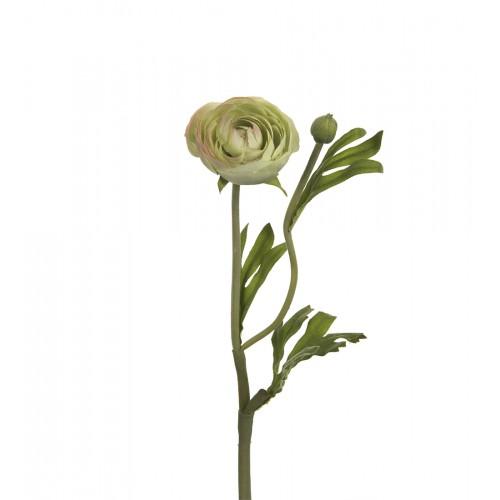Green Persian buttercups flower