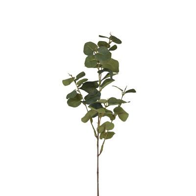 Big eucalyptus branch