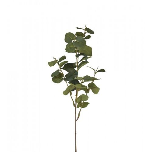 Rama de eucalipto de hoja grande - BECARA
