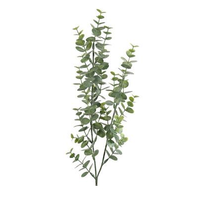 Rama de eucalipto pequeña - BECARA