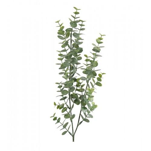 Small eucalyptus branch