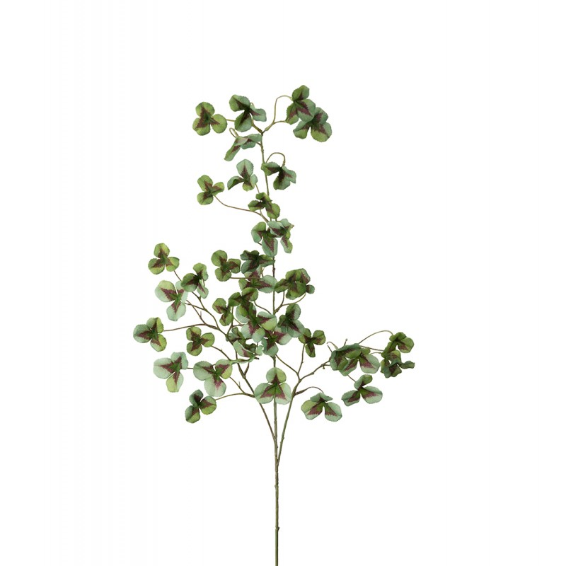 Oxalis branch