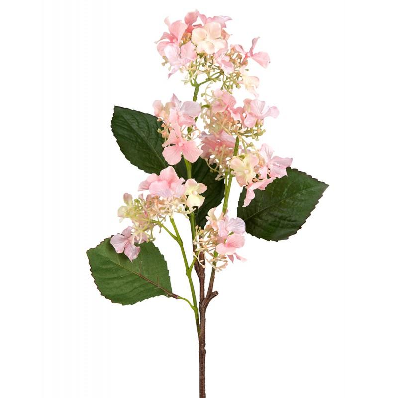 Pink hydrangea branch
