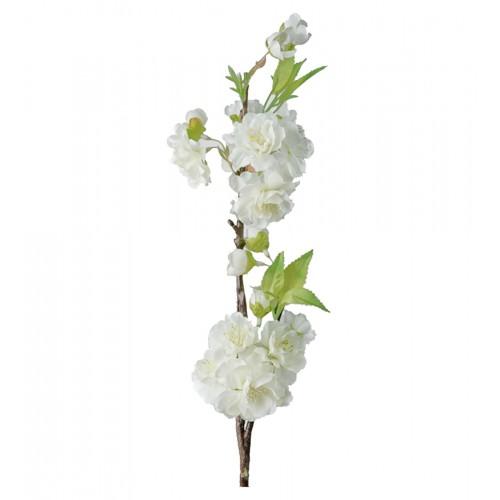 Rama de cerezo blanco - BECARA