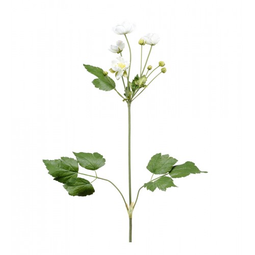 Flor anémona blanca - BECARA