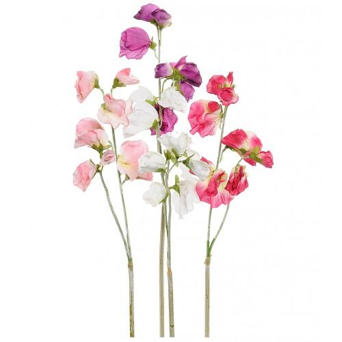 Flor de arvejilla multicolor - BECARA