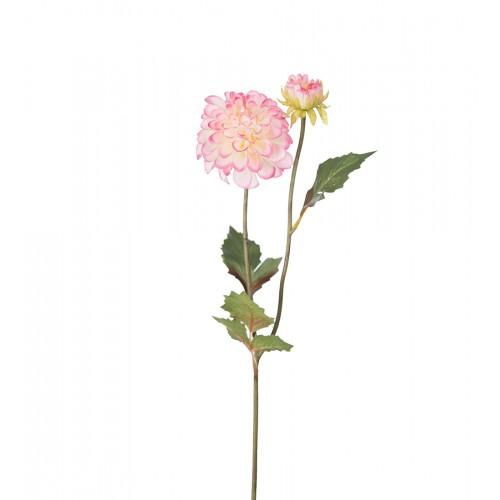 Pink dahlia branch