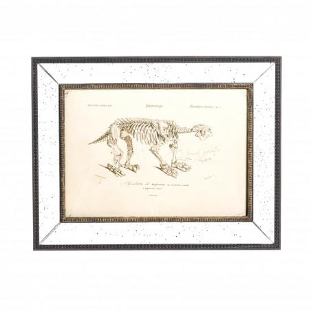 Cuadro de esqueleto de mamífero (II)