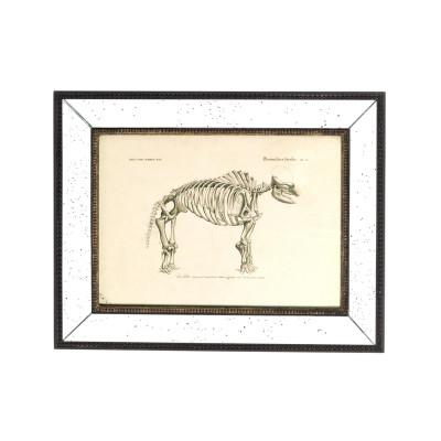 Cuadro esqueleto de mamífero (I)