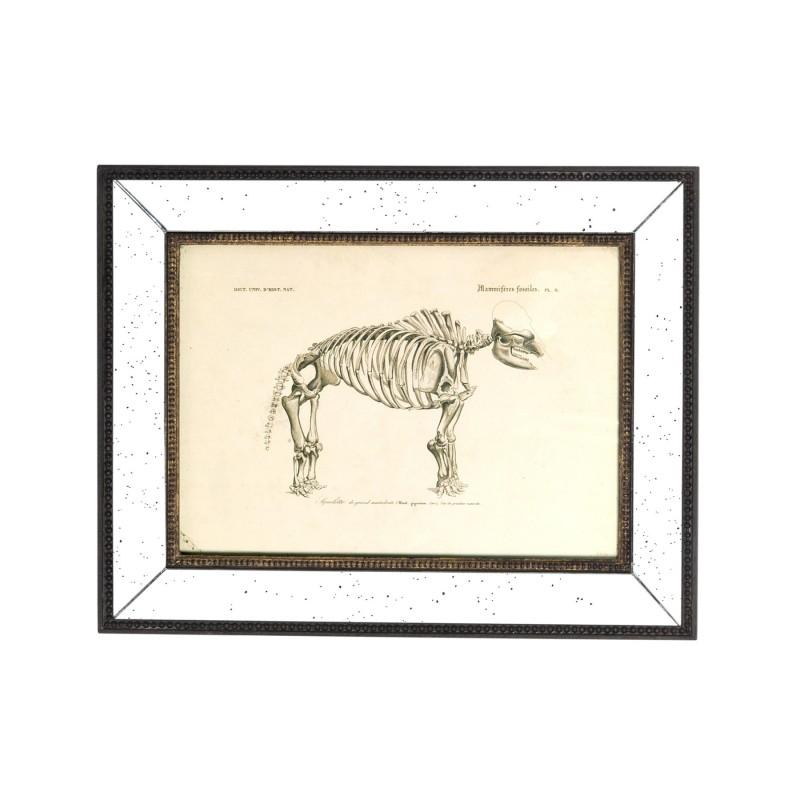 Mammal skeleton art work (I)