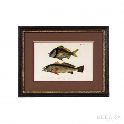 Horizontal art work with fishes