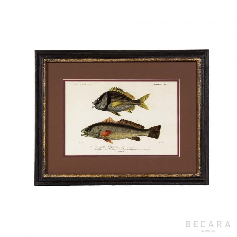 Cuadro con peces en horizontal regalo personal en becara for Cuadros de peces
