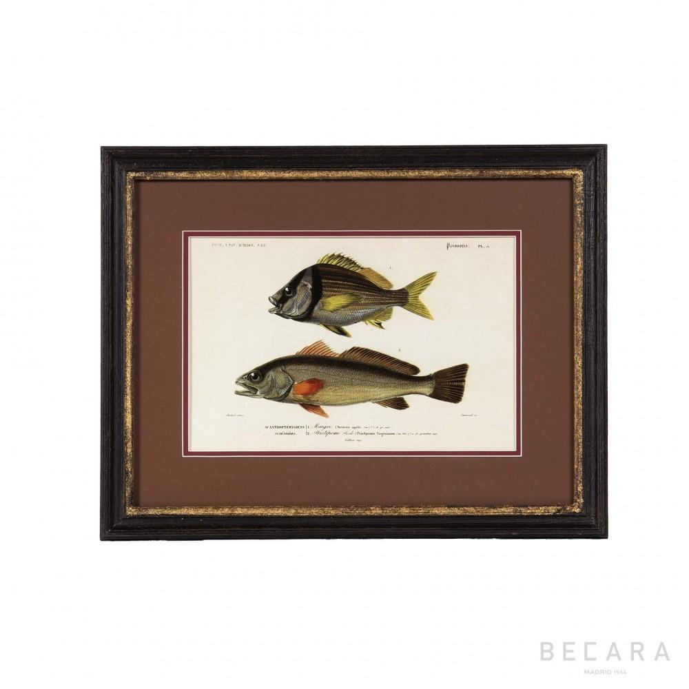 Cuadro con peces en horizontal regalo personal en becara for Cuadros con peces