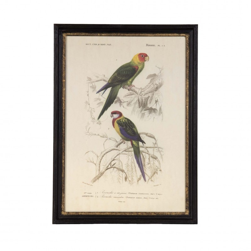 2 parrots art work