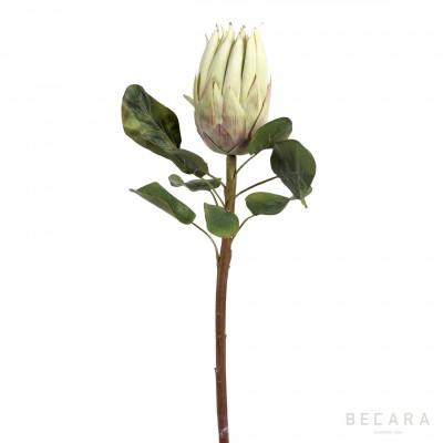 Flor Protea verde claro 68cm - BECARA
