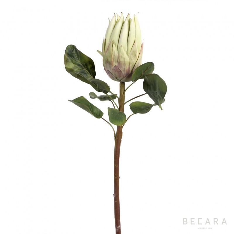 Rama de flor Protea verde claro 68cm - BECARA