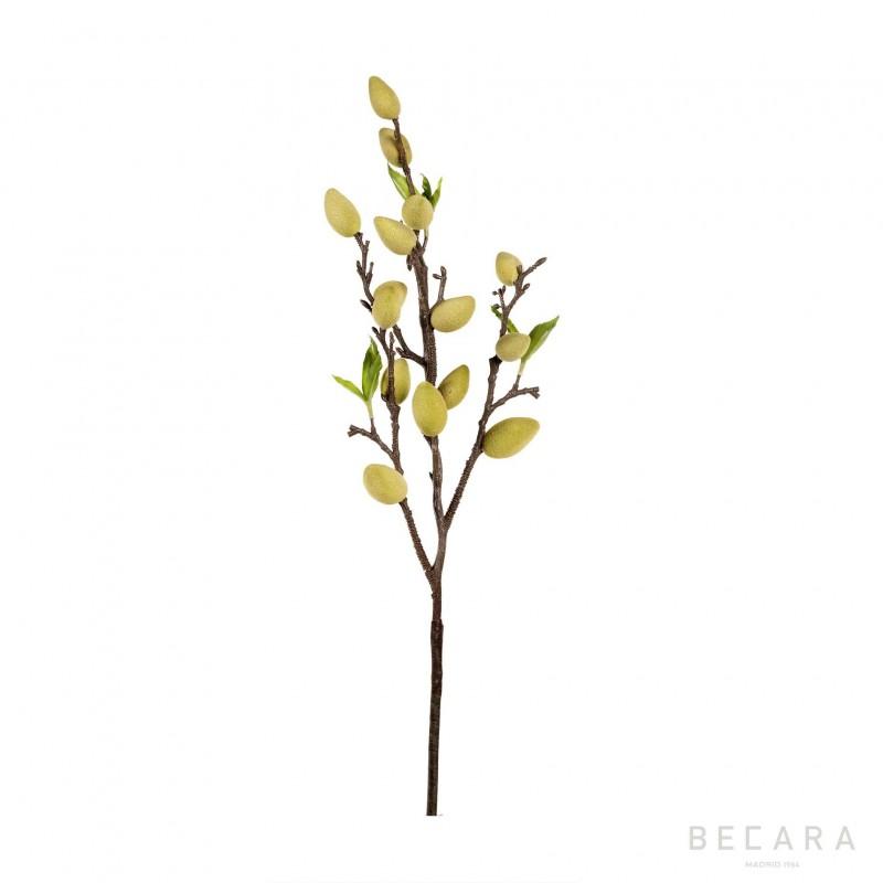 61cm Almond tree branch
