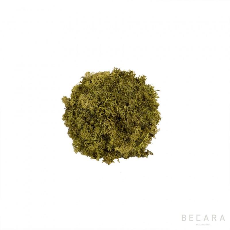 Bola de musgo pequeña - BECARA