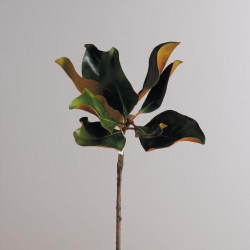 Rama de hojas de Magnolia 60cm