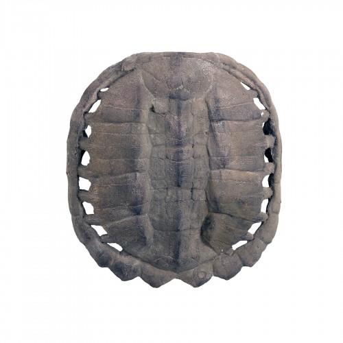 Caparazón de tortuga anverso grande