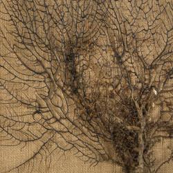 Cuadro de madera árbol - BECARA