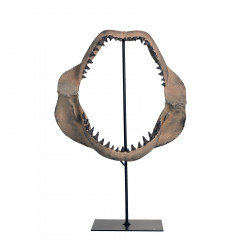Mandíbula tiburón en stand