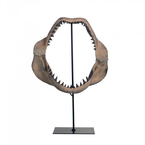 Mandíbula tiburón en stand - BECARA