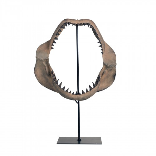 Shark jaw on stand
