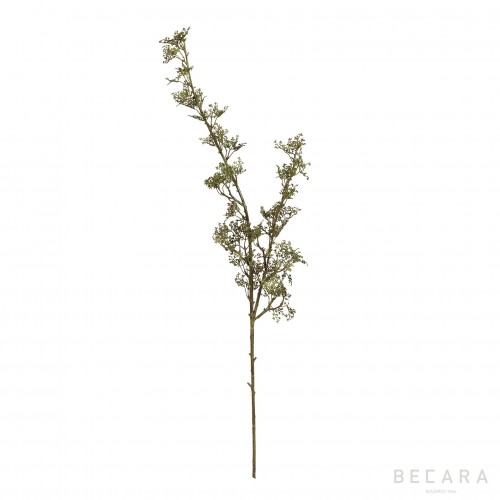 Rama de semillas  - BECARA