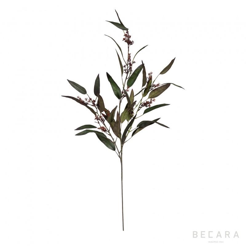 Rama de eucalipto - BECARA