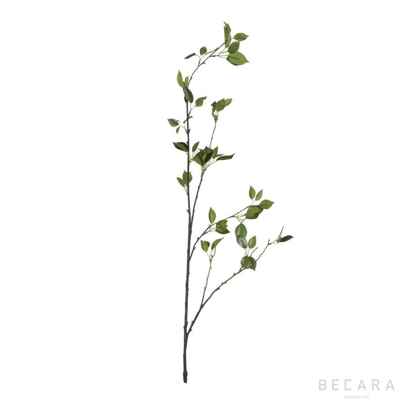 Rama Spring - BECARA