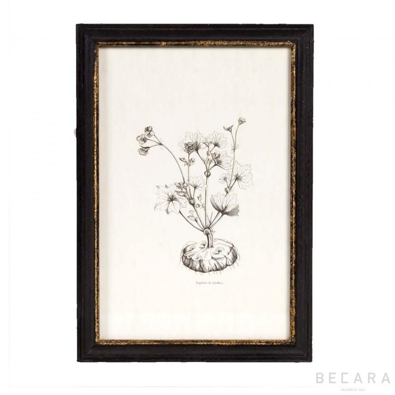 B model flower picture