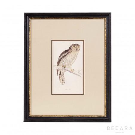 Beige falcon picture
