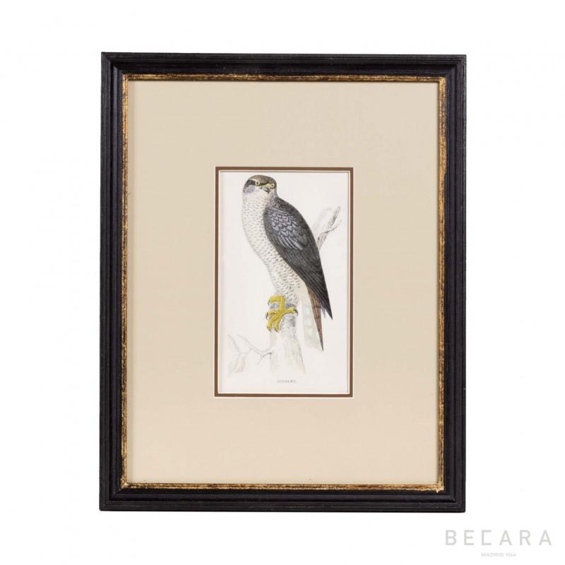 Gray falcon picture