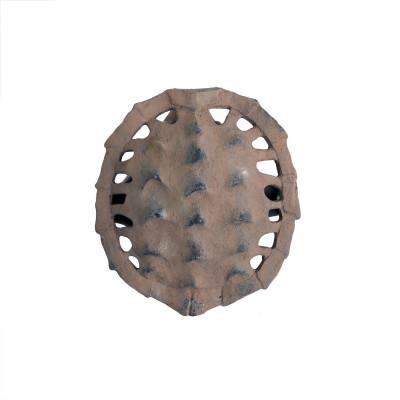 Caparazón de tortuga anverso pequeño