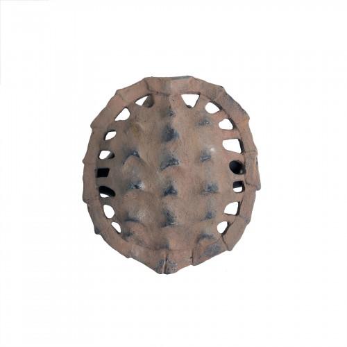 Caparazón de tortuga anverso pequeño - BECARA