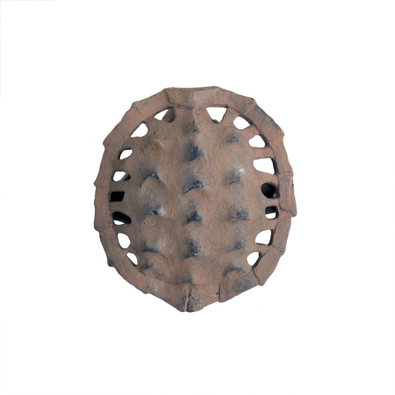 Small anverse turtle carapace